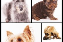 Dog portraits - my work / Acylic block with 9 print apertures -  soooooo cool!