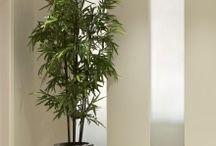 Indoor black bamboo