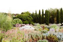 Rae St Garden