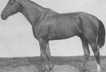 Budyonny Horse (Буденновские лошади) / лошади буденновской породы