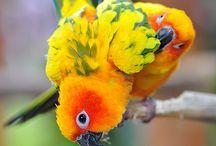 tropical birds / by Vicki Chester-Stark