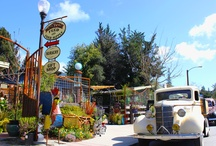 Welcome to the Shop / We're your sustainable living convenience store, carrying everything you need from harvest to preservation. Homestead supplies, home canning, pickling, fermentation, cheesemaking, home brewing, cultured foods and so much more. Come visit us in Ben Lomond, CA!