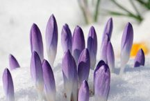 Spring Inspiration / Spring is the time for rebirth, rejuvenation, new life. Come enjoy all things spring.