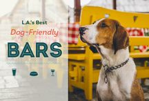 Guides For Dog Friendly Cities / Find the best dog parks, pup-friendly restaurants, and things to do with your furry best friend near you!
