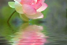 Lotus Flower - Next Tattoo