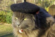 Kitty Cat Stuff