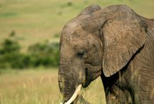 travel · africa / nature · wildlife · tribes · national parks · lodges · camps · safari style