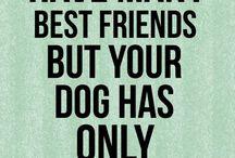 Hunde/ dogs