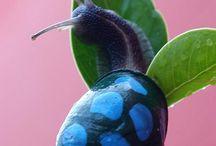 Snail`s / Snail`s