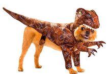 Déguisements pour chiens / Les plus beaux déguisements pour chiens