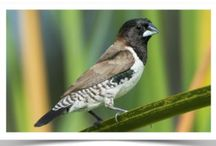 Finches for Sale!