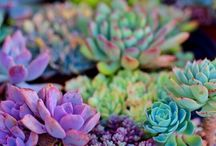 Succulent splendor / by lustrousbird ॐ