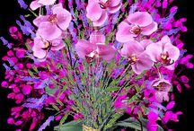 Fleur/  Bloemen / Vlinders