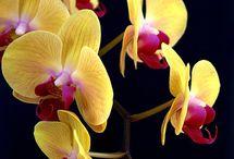 Kukkia / Kukkia