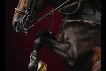 Horses / by Donna