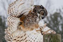 Birds : owls