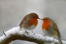 Birds in Snow