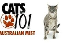 Meet the Breeds: Cats / Varity of cats most clients want!