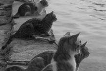 koty / koty nad morzem