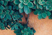 Суккуленты, кактусы