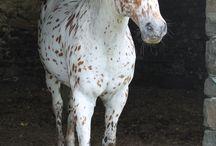 Horses & such