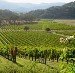 California Wineries