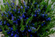 plants / by Monica Houlihan