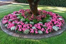 giardinaggio / piante