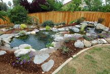 Ponds / Ideas for when I build my turtle pond!