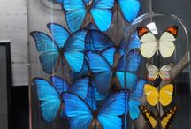 Interior Trends 2017: Butterflies