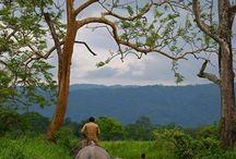 amazing India / Live Journey 2 the India