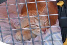 Taru´s Cats / My sweet cat family/pack