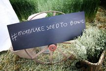 Mornflake Seed To Bowl Event / #MornflakeSeedToBowlEvent