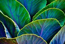 Analogous colour