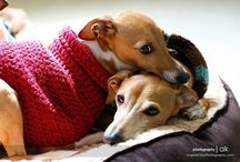 DOGS and Greyhounds / by Kathy