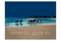 Côte d Amour et Pays Guérandais / Les créations de Gilt sur le thème de la Mer et particulièrement sur la Côte d'Amour et du Pays Guérandais sont dans un pur style graphique.