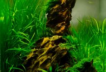 Aquascaping Baby / by Greg