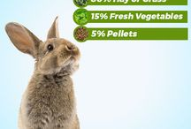 Rabbit Diet / What should you be feeding your rabbit?
