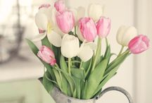 light pink tulips <3