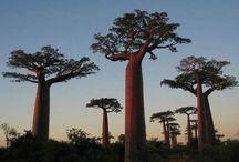 Strange Trees & plants