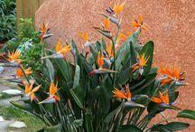 Bryce's garden