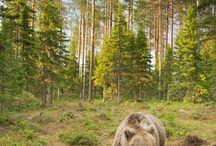 Metsä ja luonto