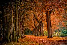 Love Fall.... 8-)