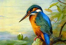 Rybárik