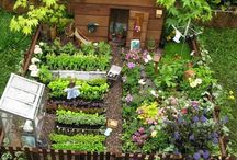 Fairy/Miniature Gardens / Creating miniature gardens filled with magical gardens of make believe and imagination.   / by KayJay61