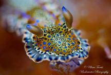 Nudi's are awesome