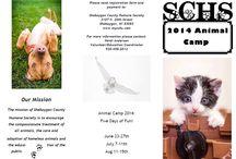 SCHS: News & About