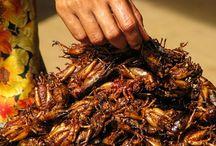 Larva food