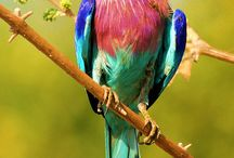 South African Birds / Beautiful birds from Southern Africa