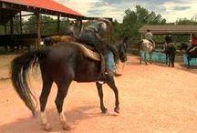 Academy Riding Stables / Horseback Riding through Garden of the Gods Park